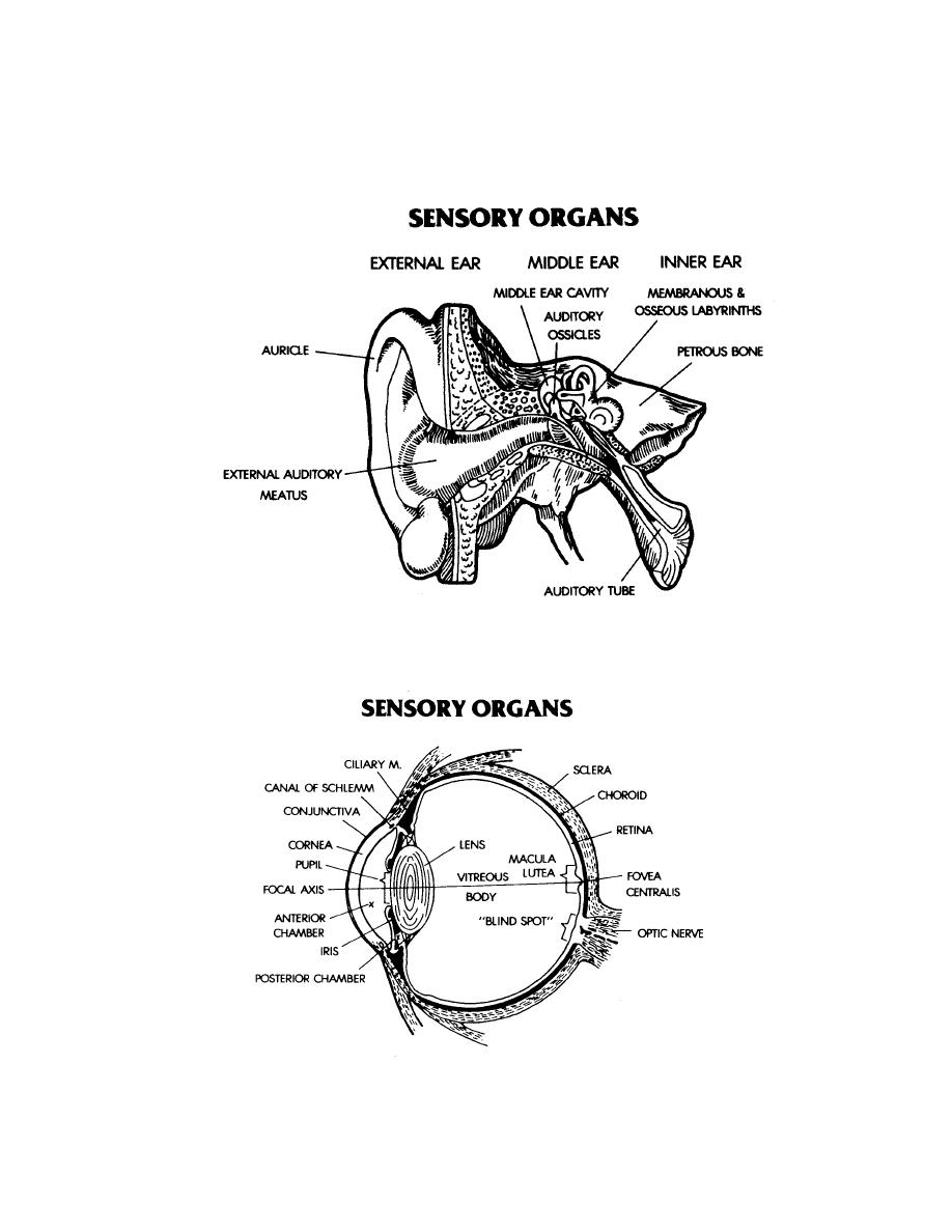 Section XIV  STEMS - Pertaining to the Sensory Organs