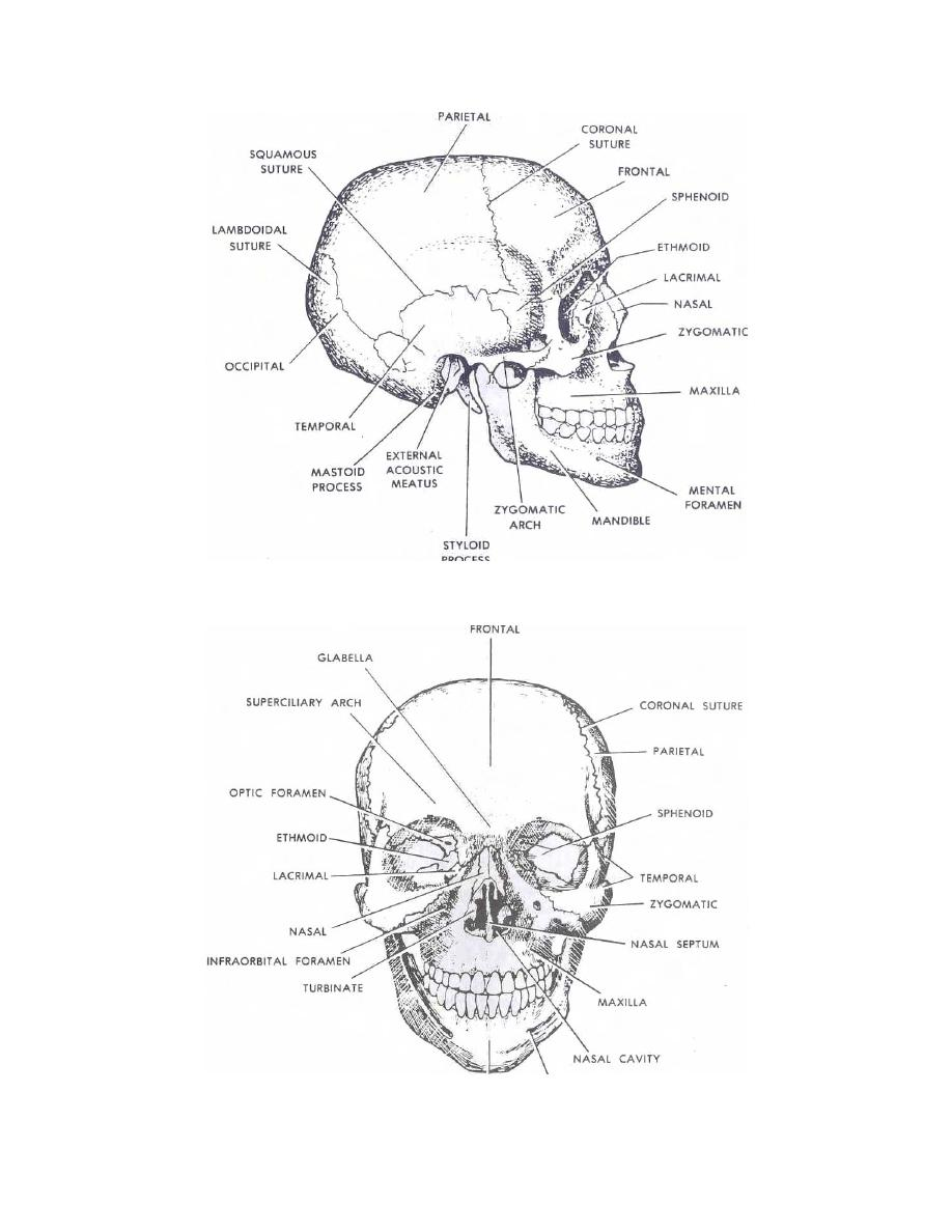 Skull Anatomy Worksheets http://armymedical.tpub.com/MD0501/MD05010050.htm