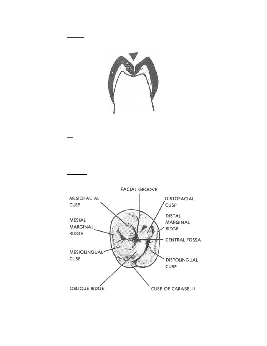 Dental anatomy of maxillary first molar 5270605 - follow4more.info