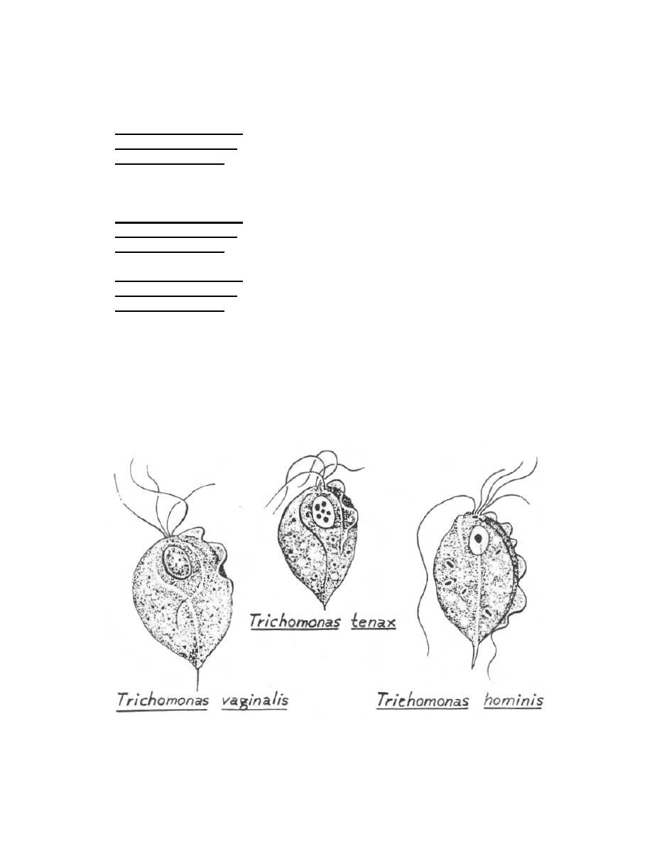 figure 1-27  trichomonas pathogens