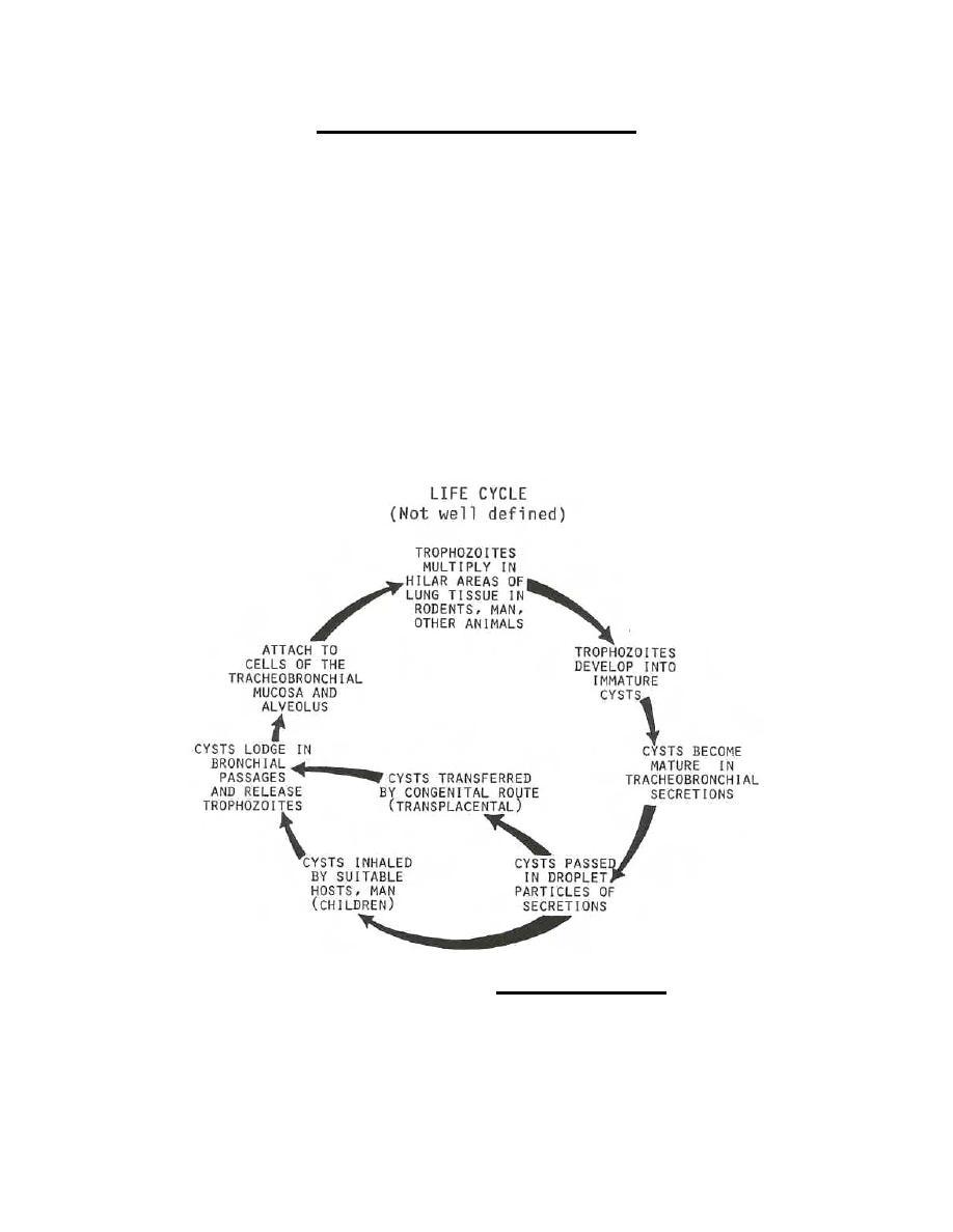 Figure 2-15  Life cycle of Pneumocystis carinii