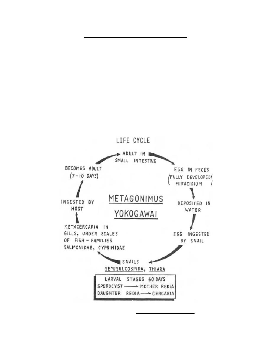 Figure 3-28. Life cycle of Metagonimus yokogawai ...