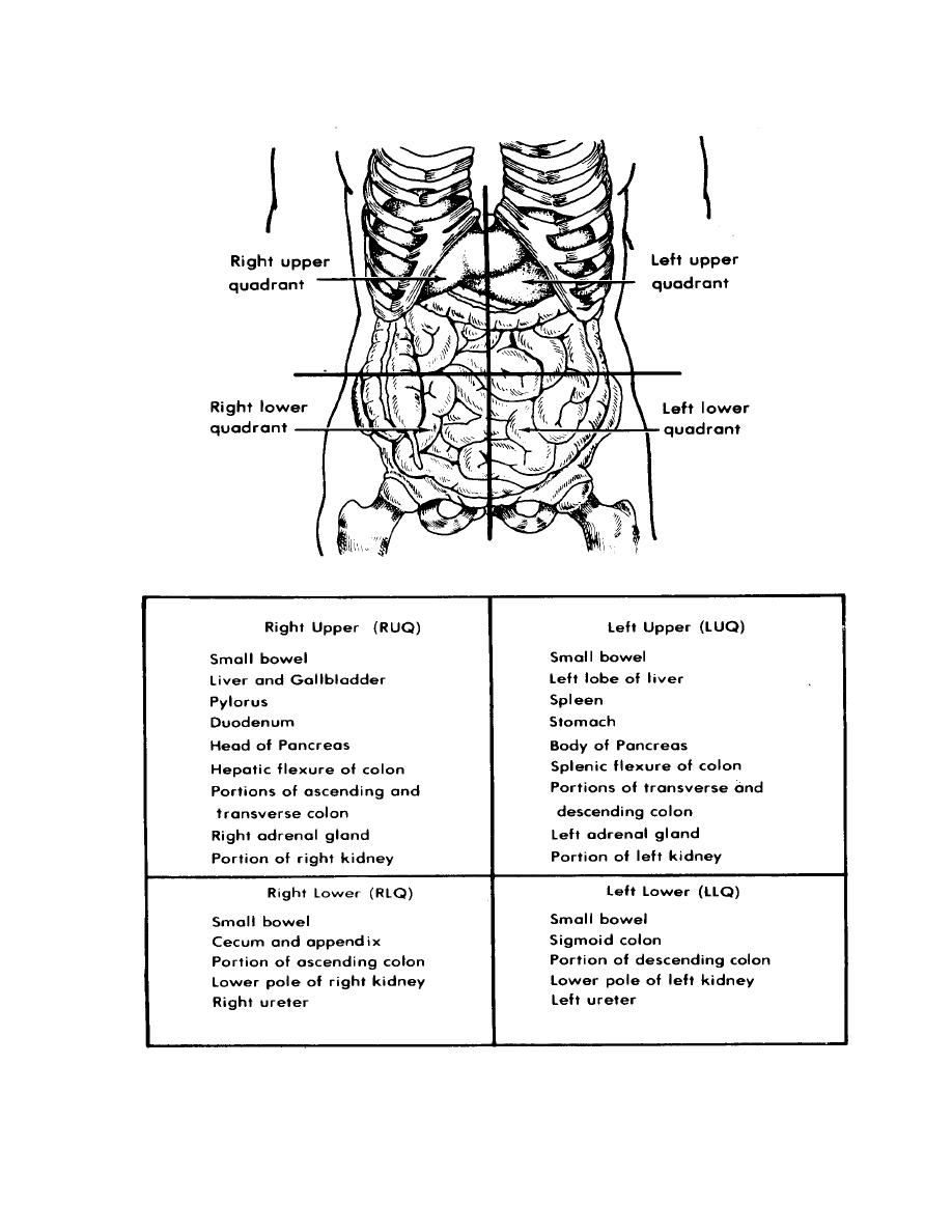 4 Quadrants of the Abdomen http://armymedical.tpub.com/MD0918/MD09180020.htm