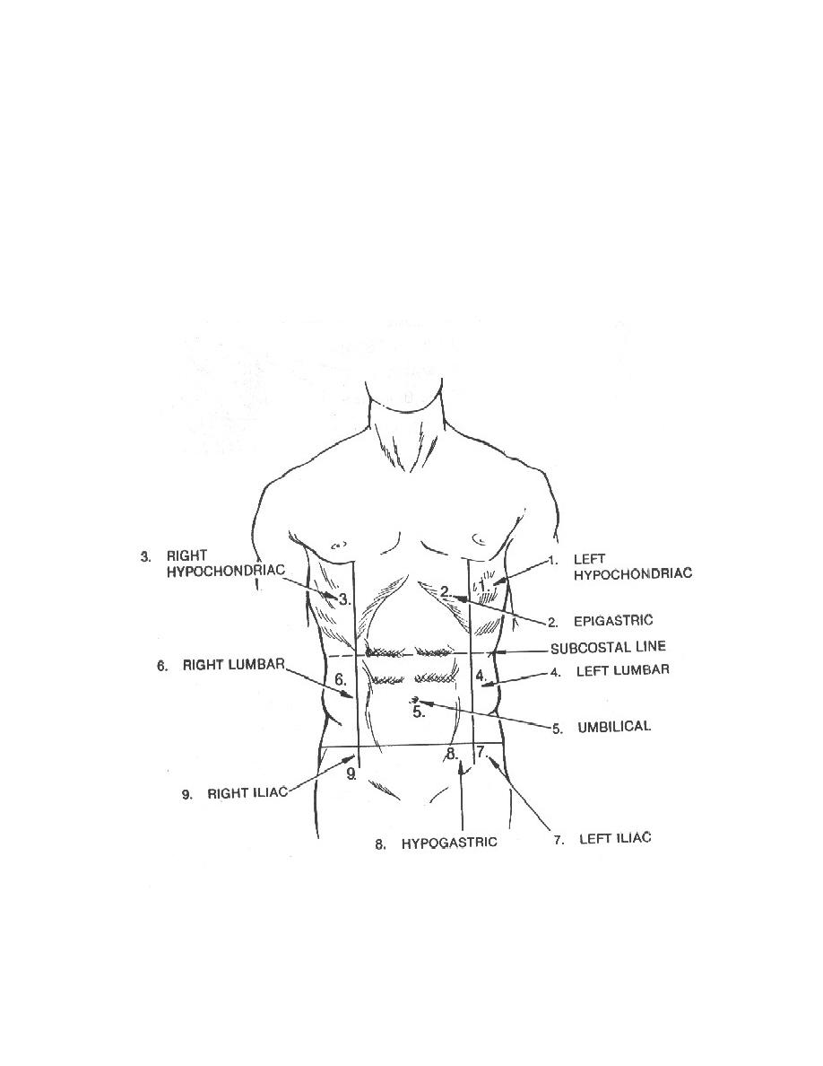 Regions of the abdomen anatomy