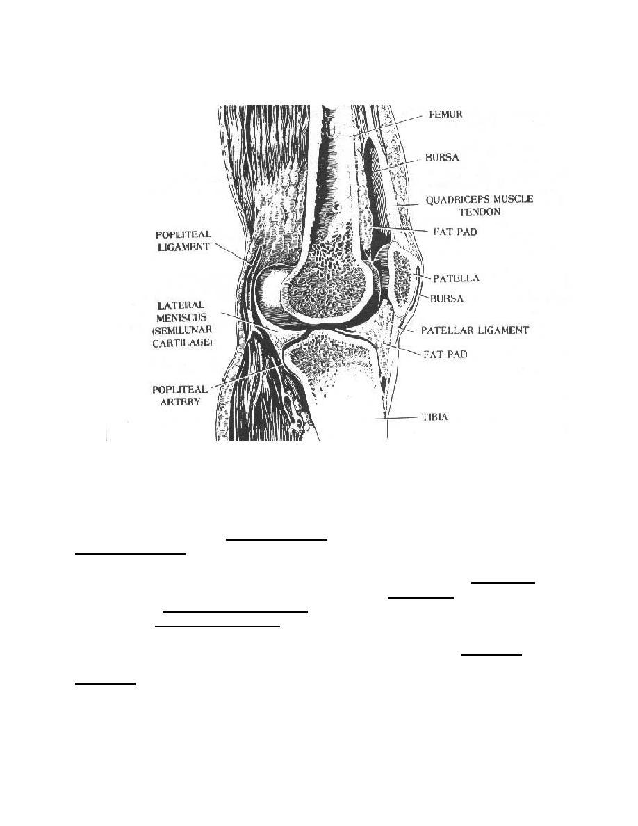 Popliteal Bursa Anatomy Gallery - human anatomy diagram organs
