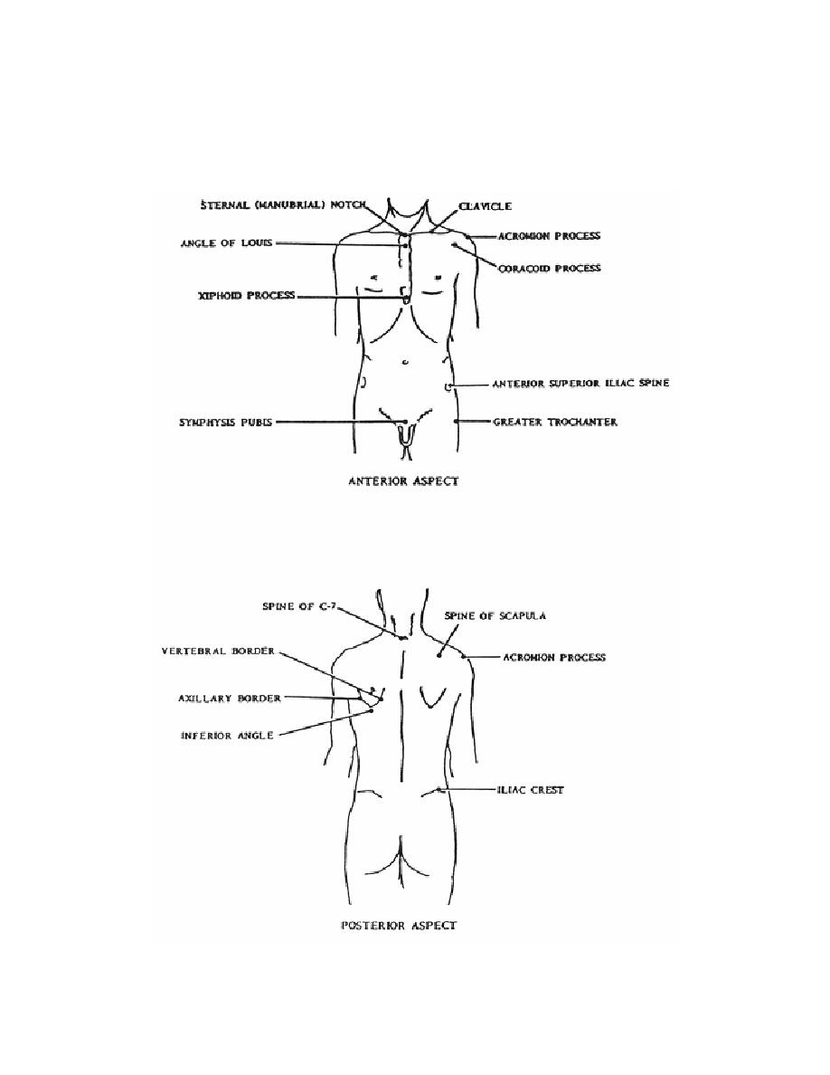 Landmarks of the trunks - Anatomy for X-Ray Specialists