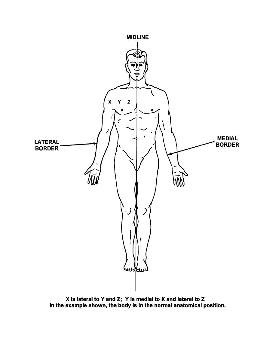 Figure 1 2 Anatomical Position And Medial Lateral Relationships