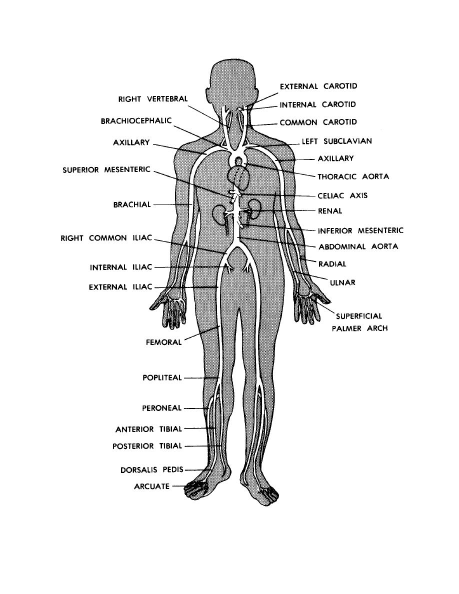 Human body systems diagram blank