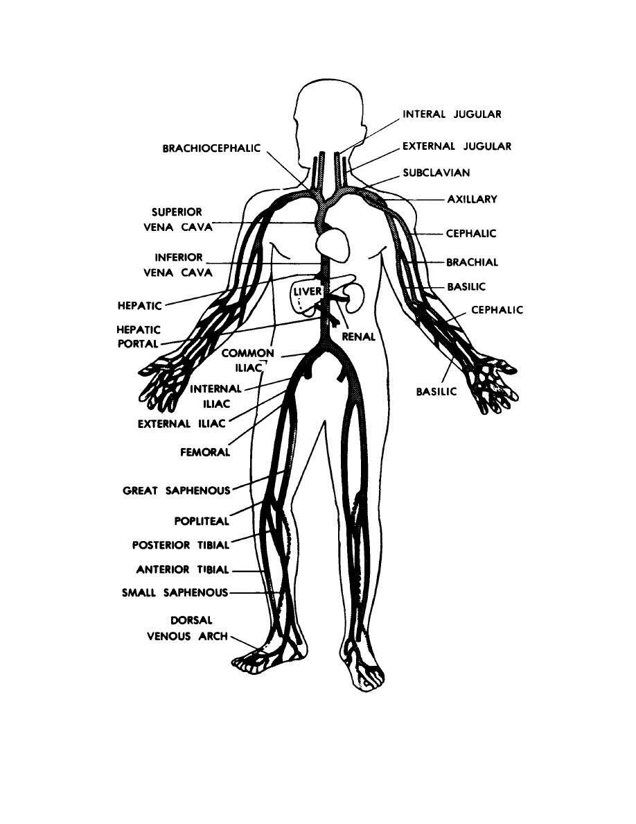 figure 9 6 main veins of the human body basic human anatomy