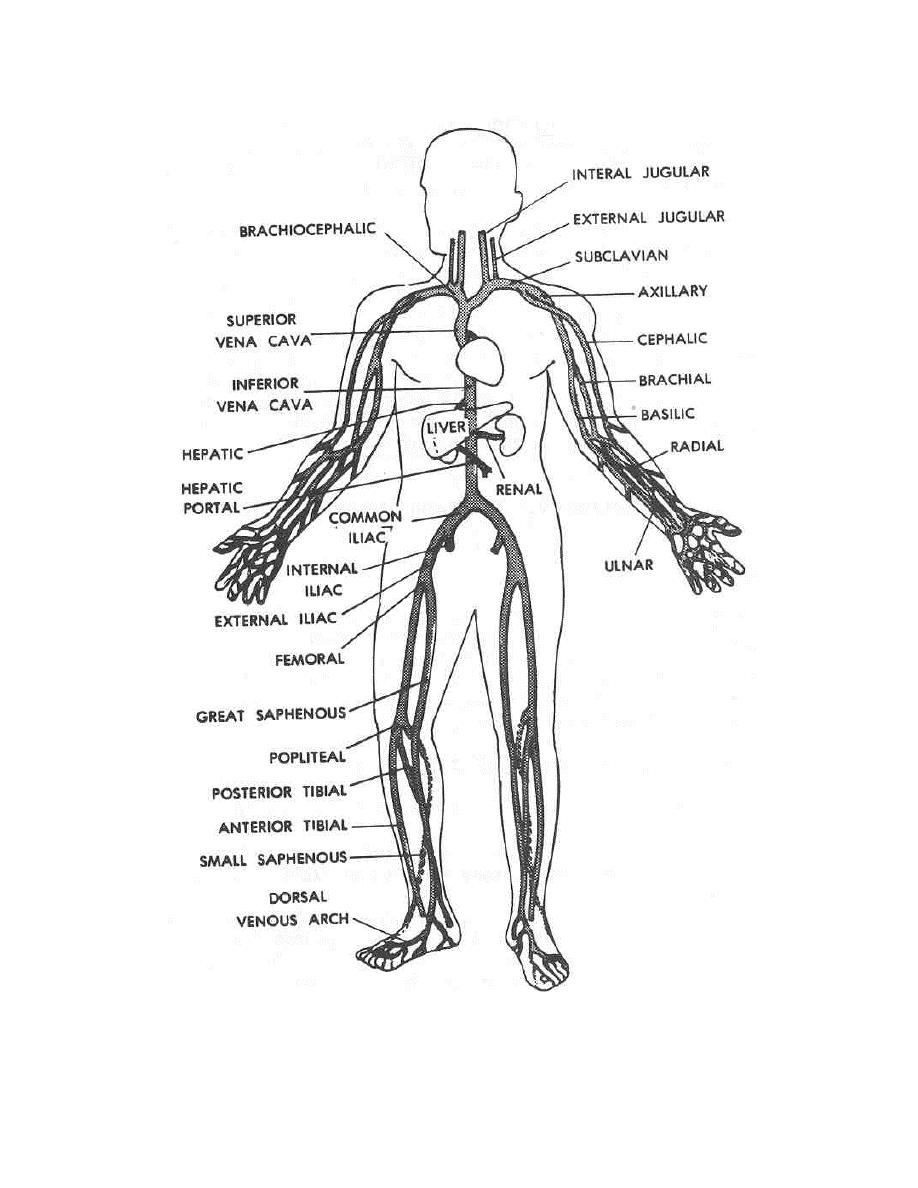 Figure 2 6 Main Veins Of The Human Body