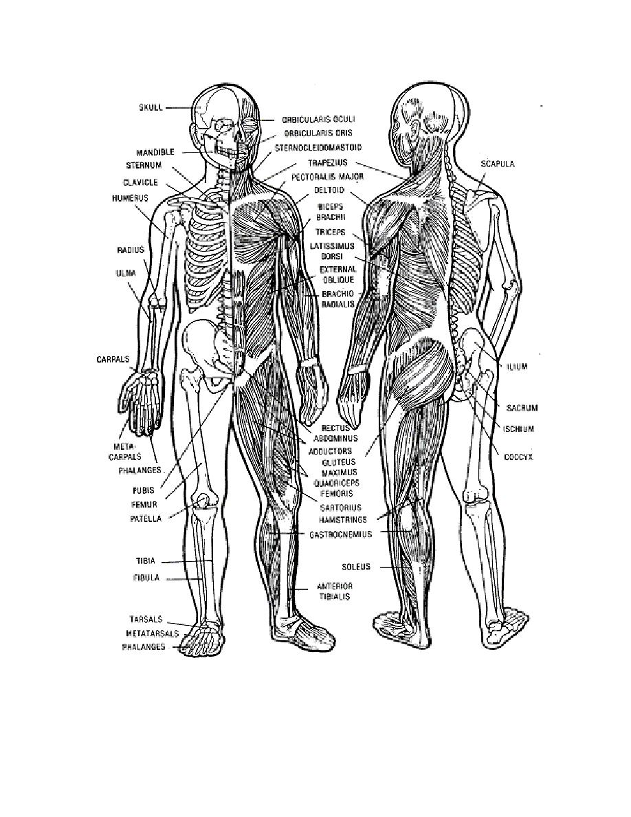 the muscoskeletal system Soap note - musculoskeletal and nervous systems - download as word doc (doc / docx), pdf file (pdf), text file (txt) or read online.