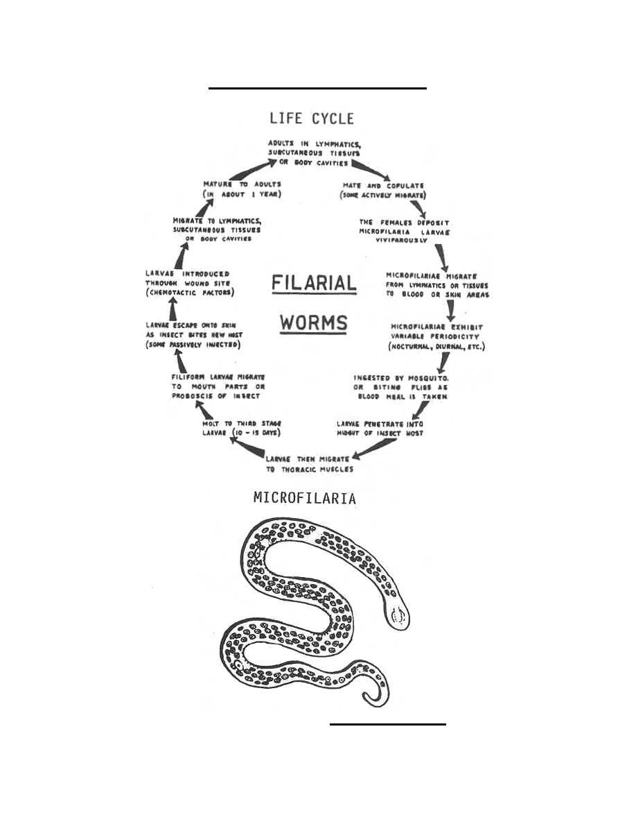 life cycle  onchocerca volvulus
