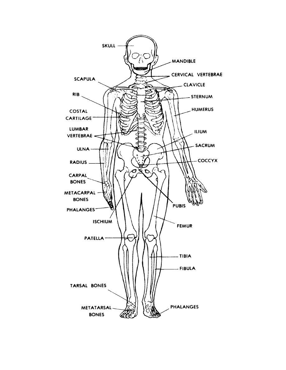 Human Skeletal System Worksheets Free Worksheets Library ...